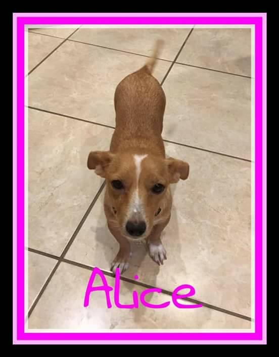 adopt-alice