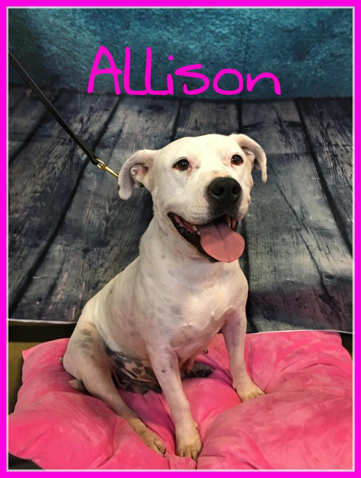 adopt-allison