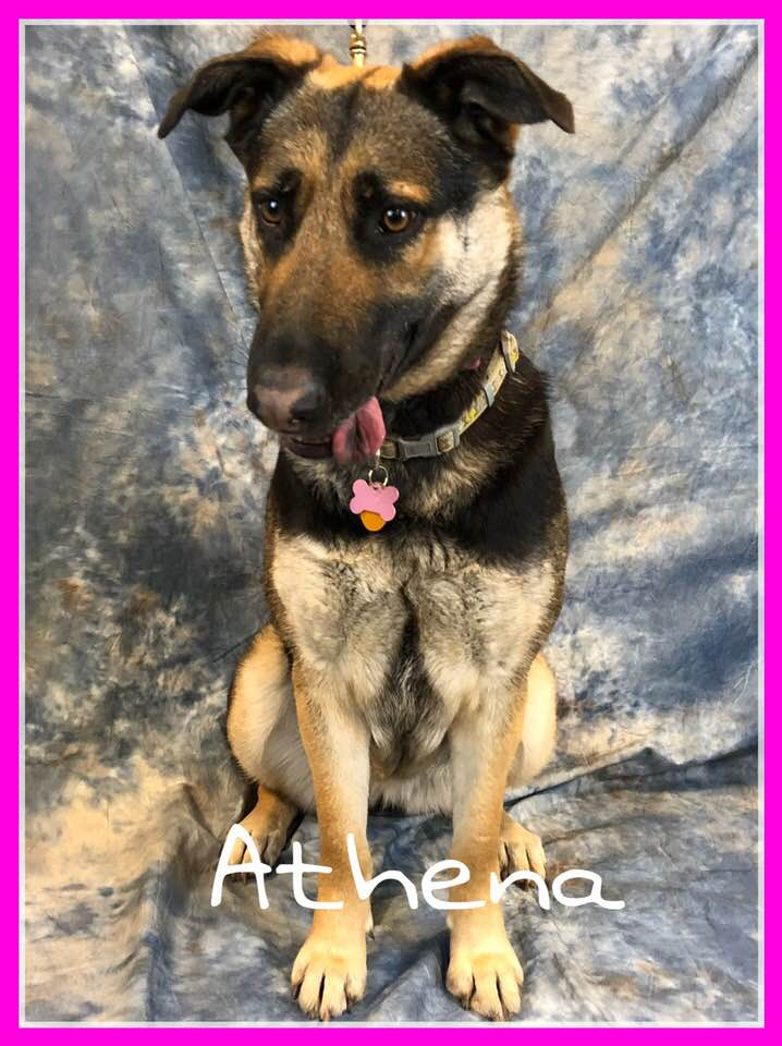 adopt-athena
