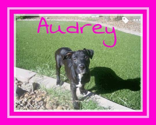 adopt-audrey