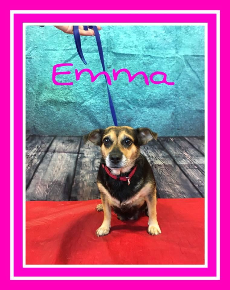 adopt-emma