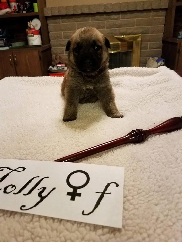 adopt-holly