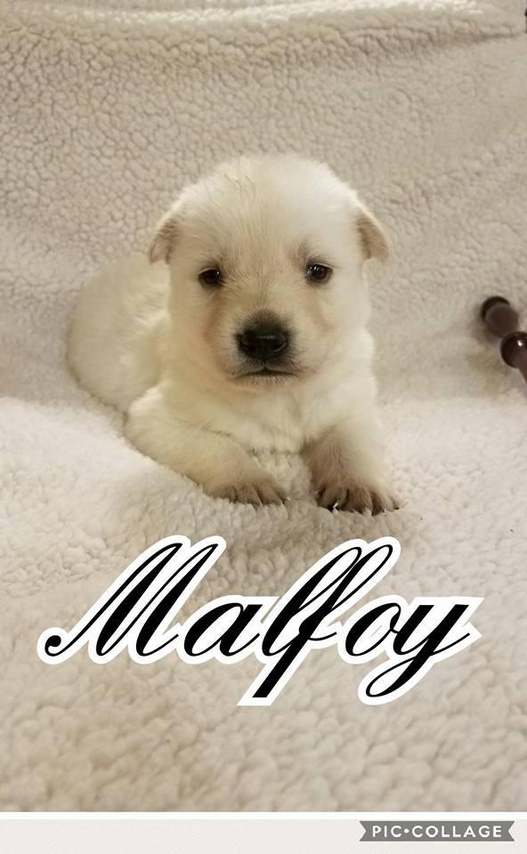 adopt-malfoy