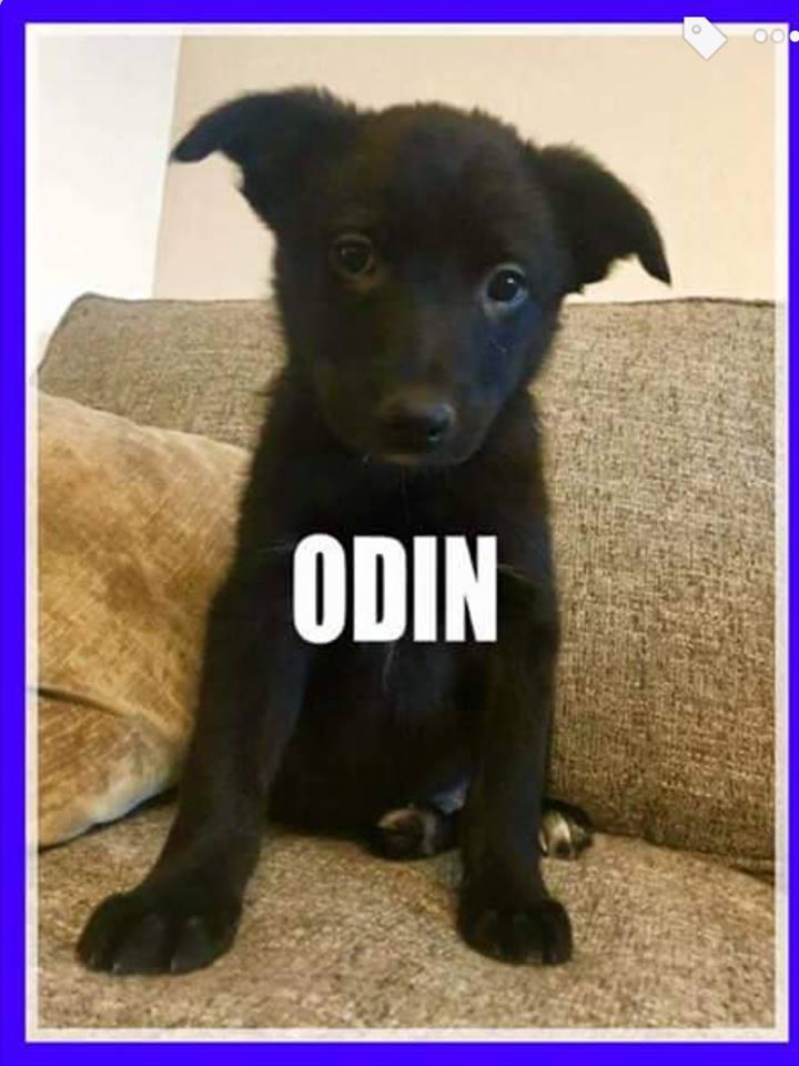 adopt-odin