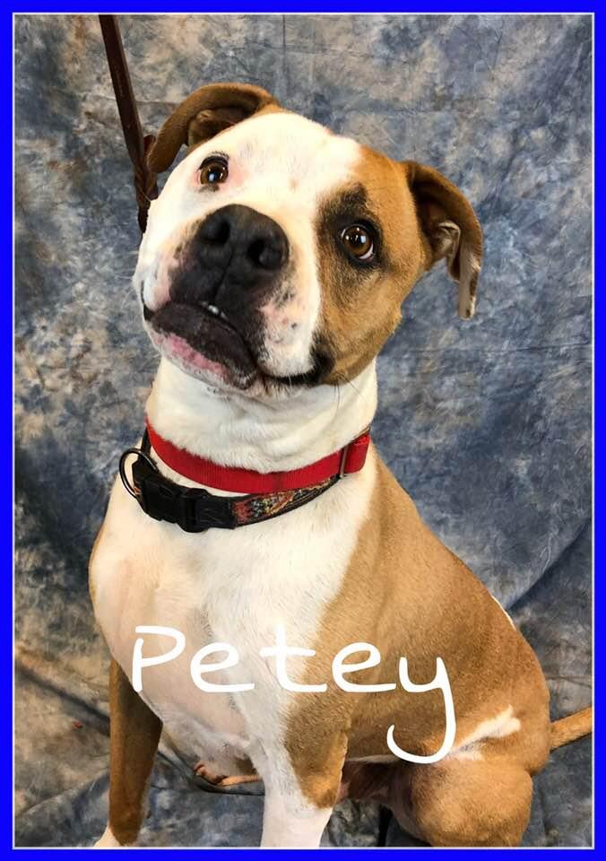 adopt-petey