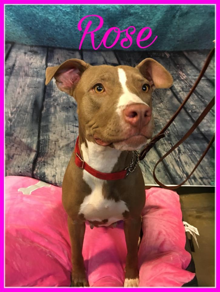 adopt-rose