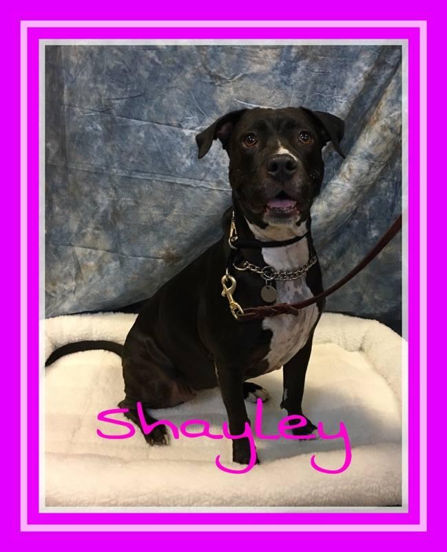adopt-shayley