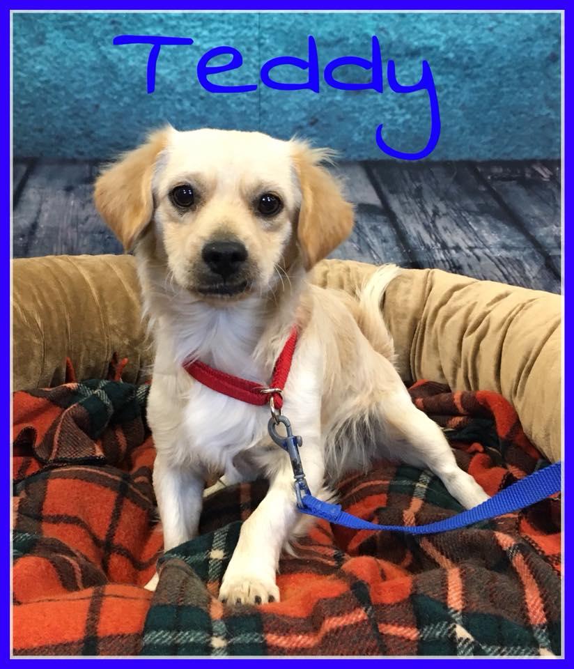 adopt-teddy