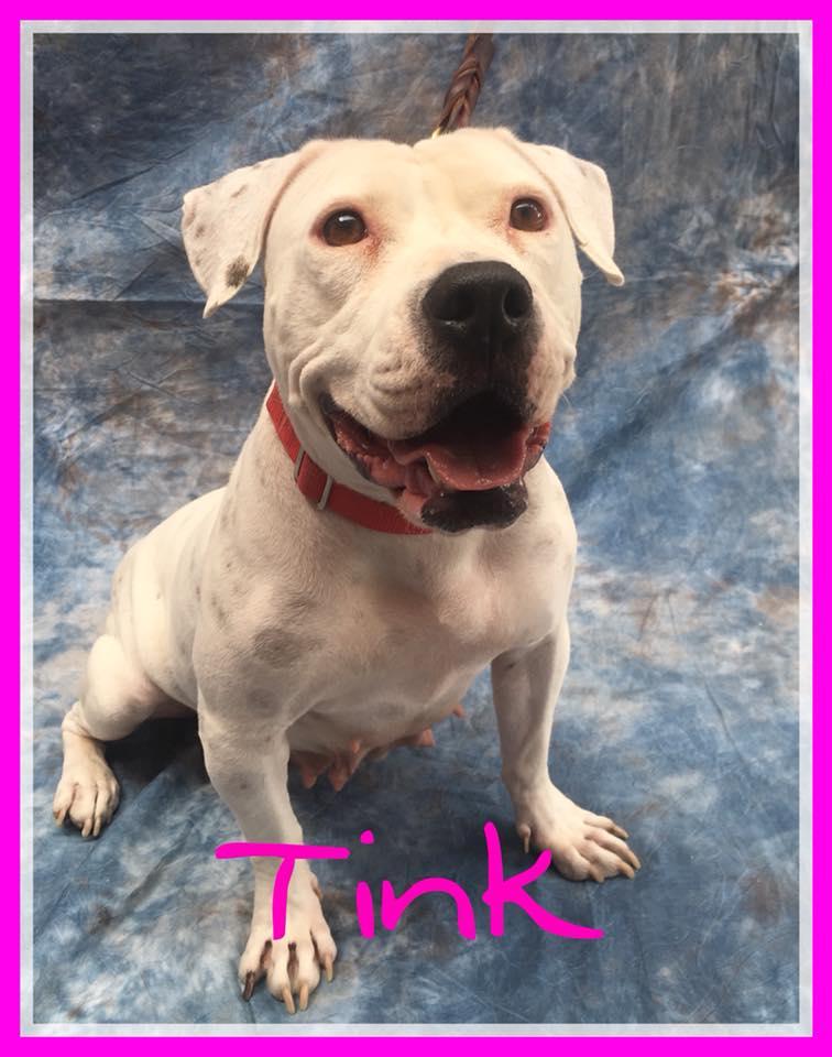 adopt-tink