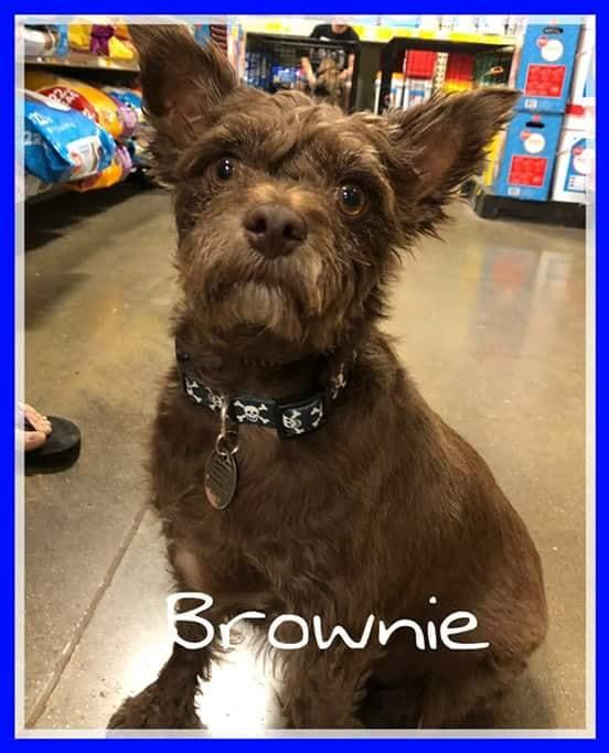 adoptable-brownie