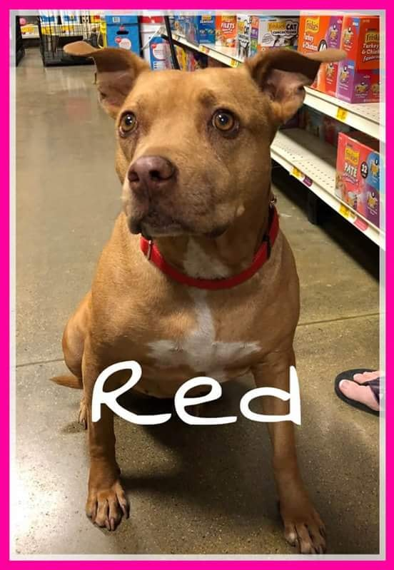 adoptable-red