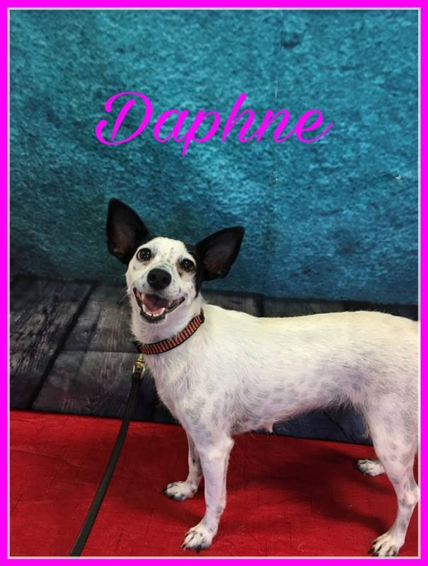 daphne-adopt