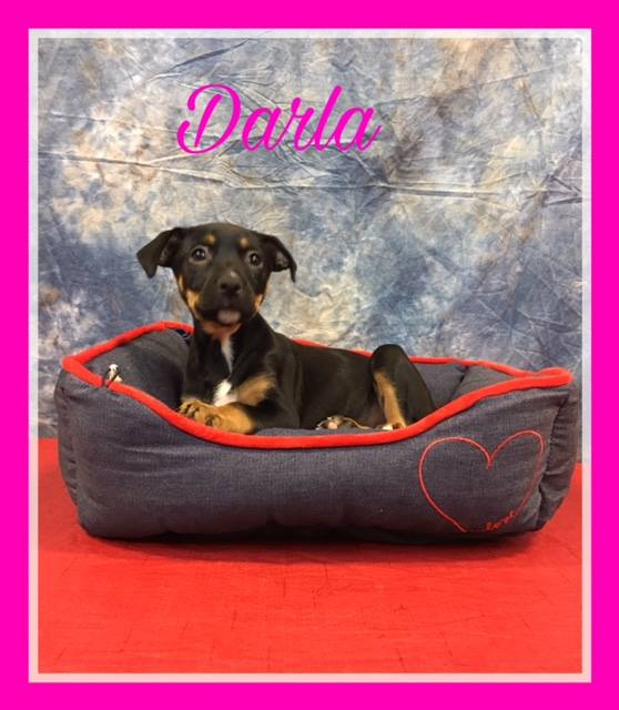 darla-adoption