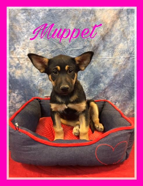 muppet-adoption