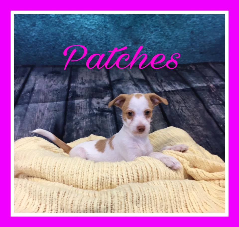 patches-adopt