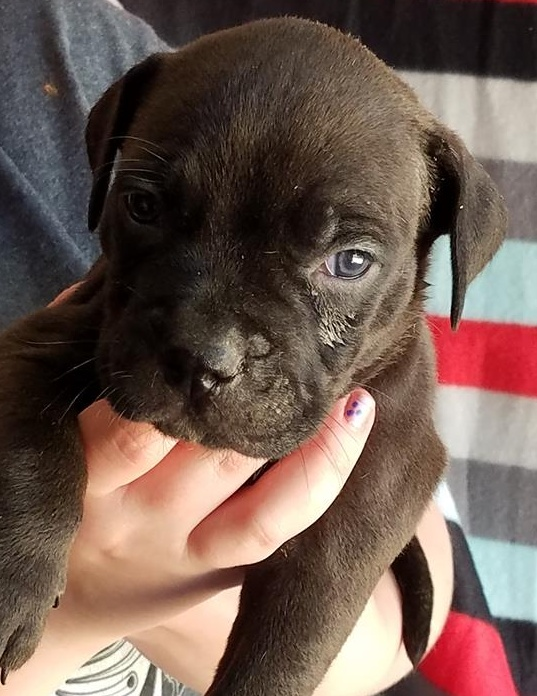 puppy10-up-for-adoption