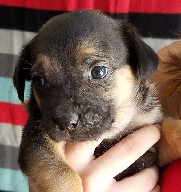 puppy13-up-for-adoption