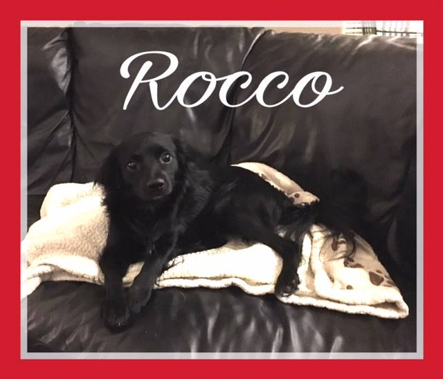 rocco-adoption