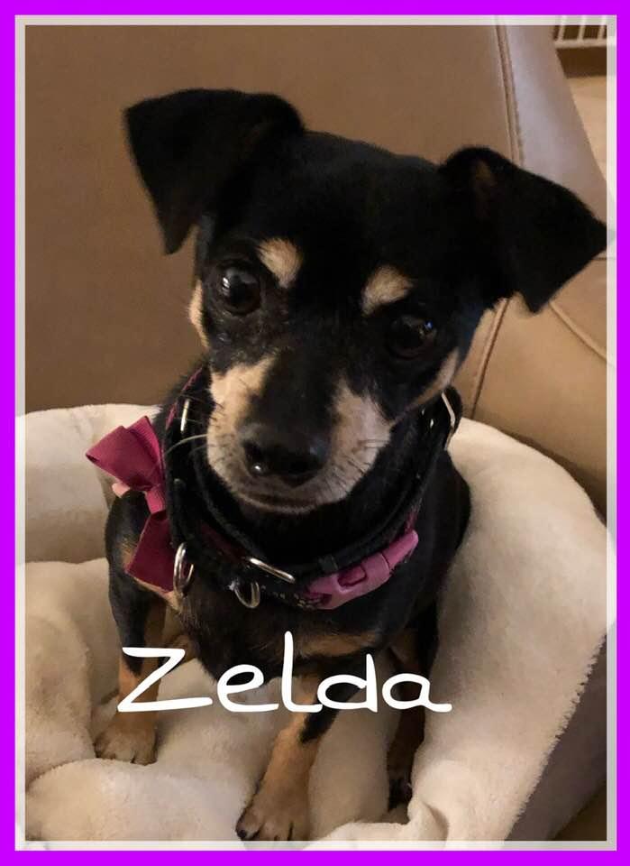adoptable-Zelda