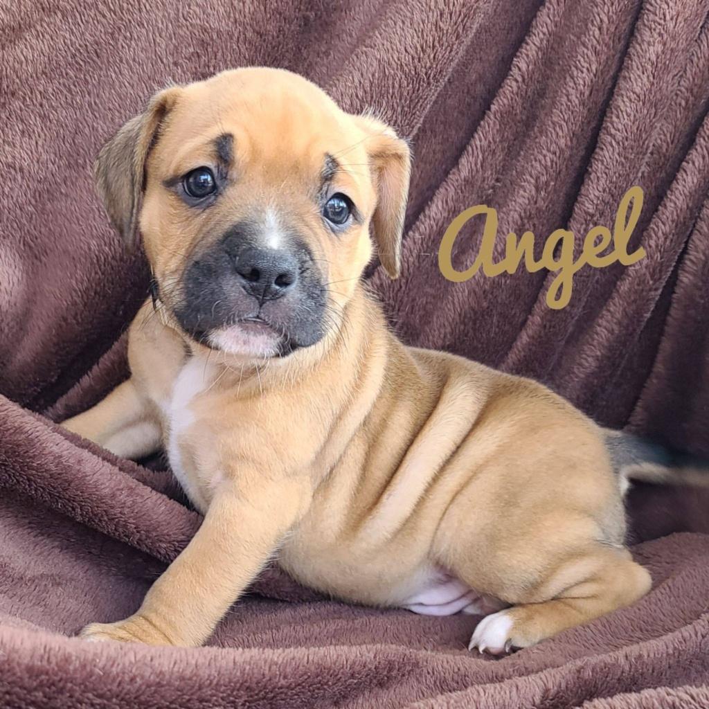 adoptable-angel