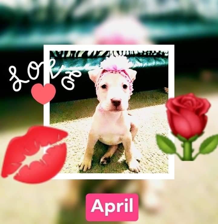 adoptable-april