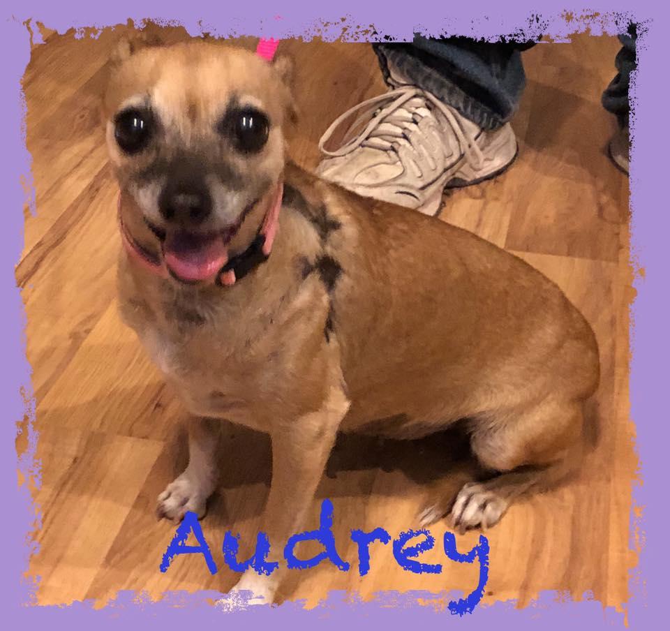 adoptable-audrey