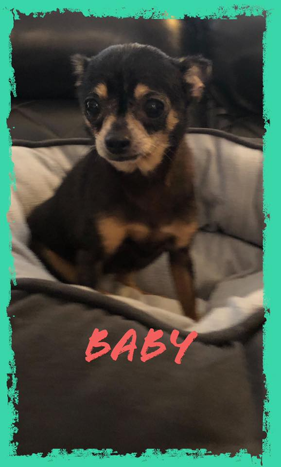 adoptable-baby