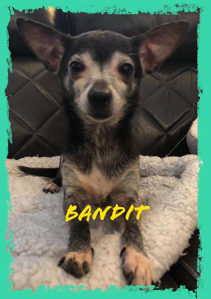 adoptable-bandit