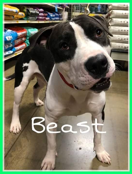 adoptable-beast