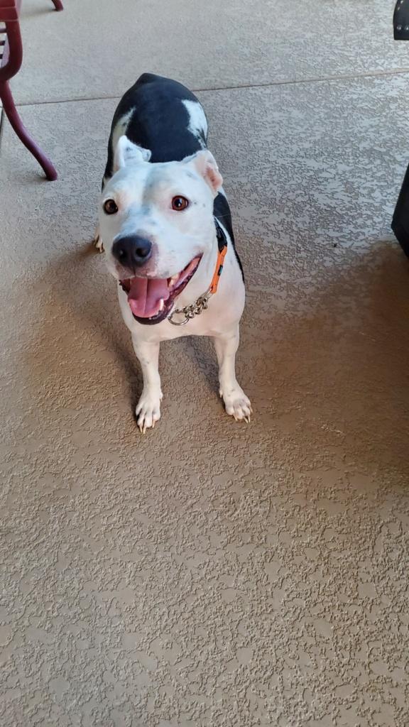 adoptable-bessie