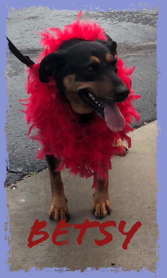 adoptable-betsy