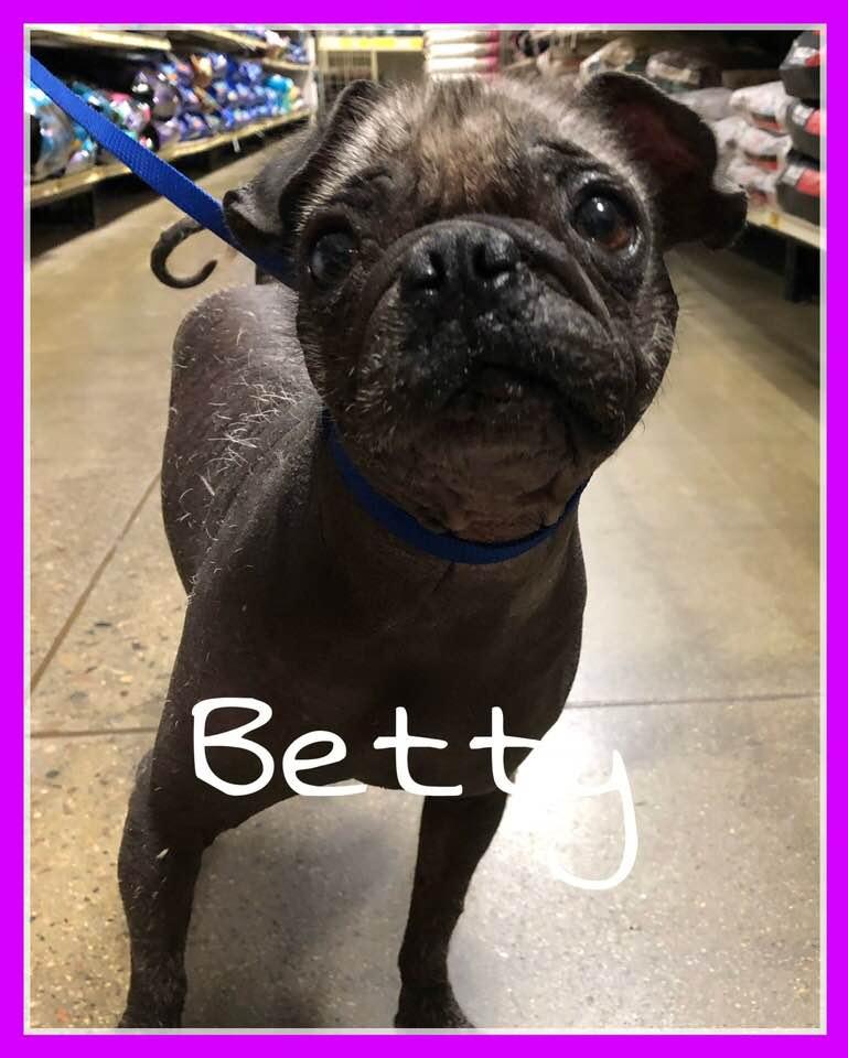 adoptable-betty