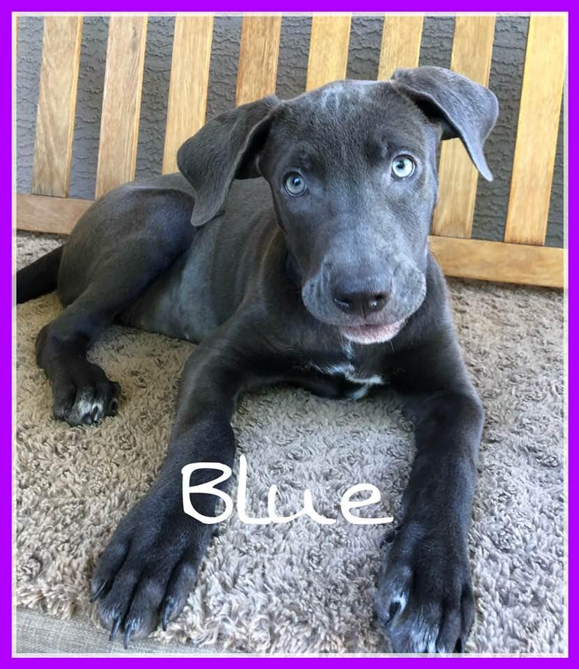adoptable-blue