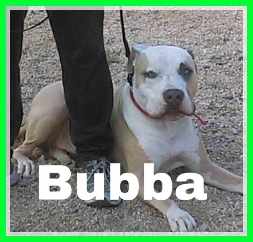 adoptable-bubba