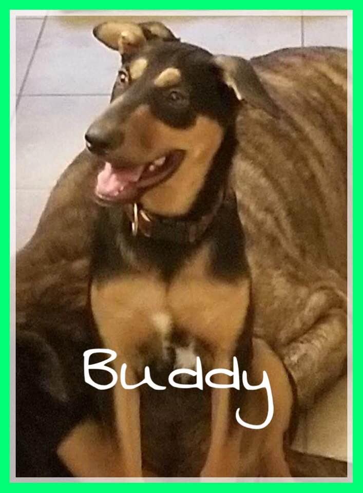 adoptable-buddy