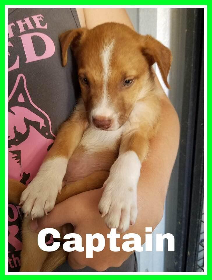 adoptable-captain