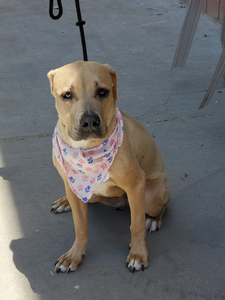 adoptable-cookie