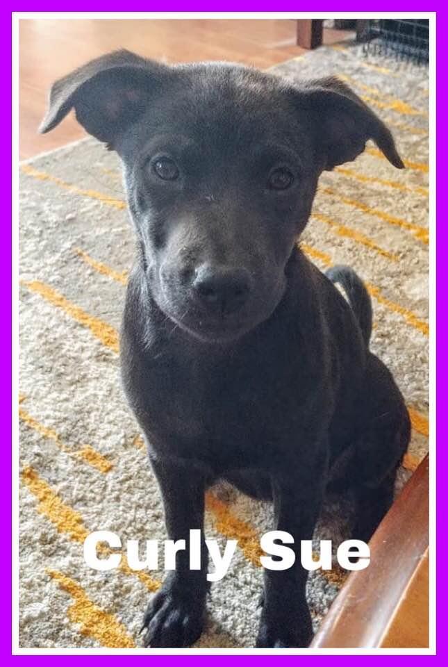 adoptable-curlysue