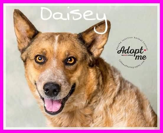 adoptable-daisey