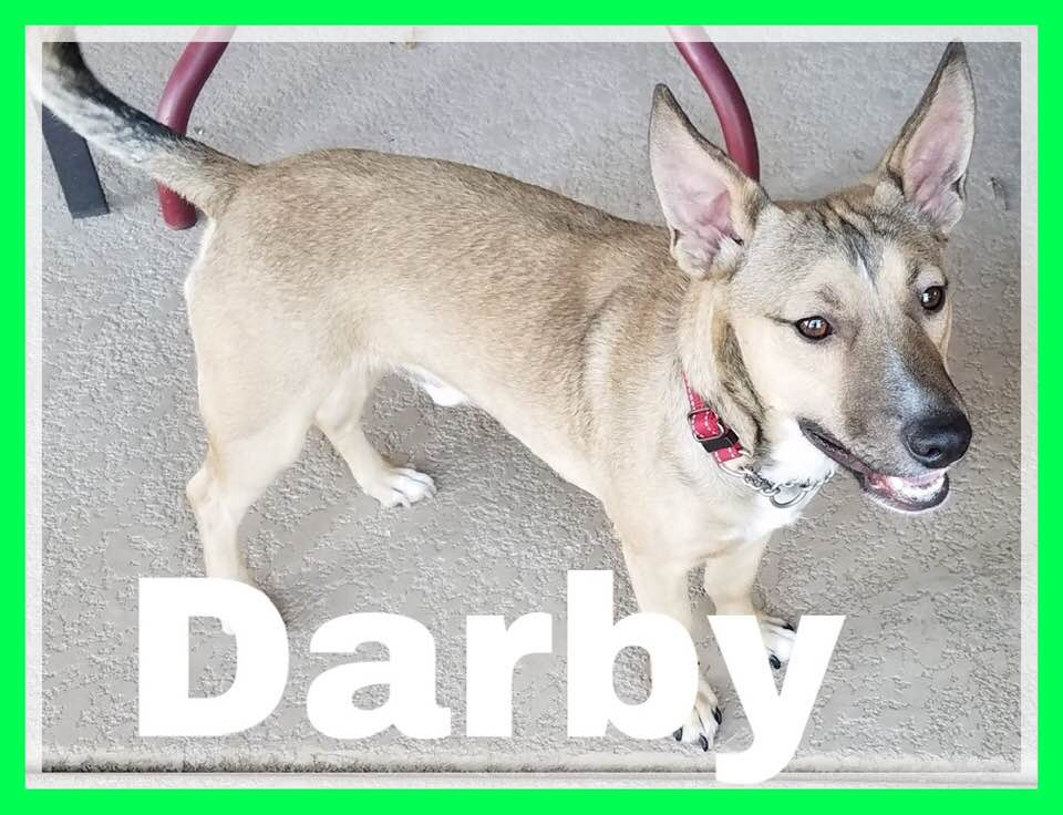 adoptable-darby