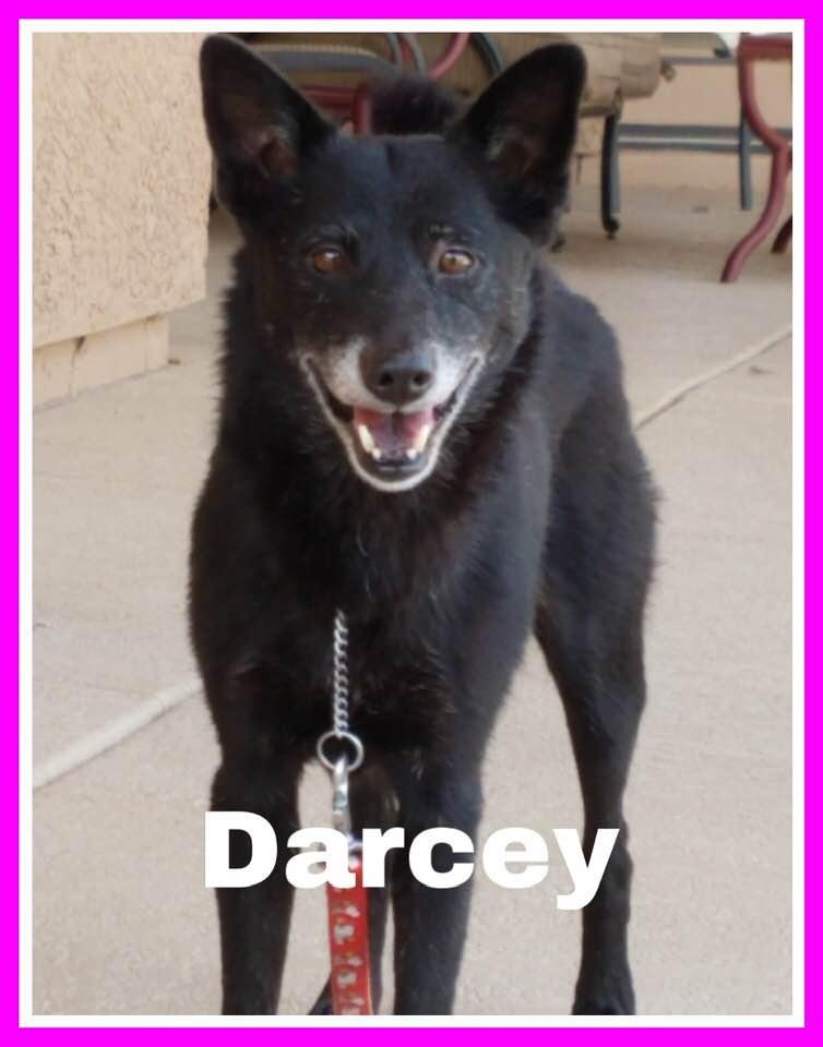 adoptable-darcey