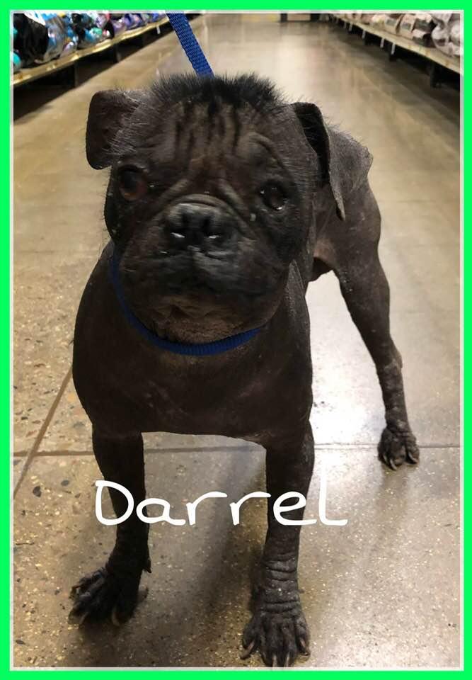 adoptable-darrel