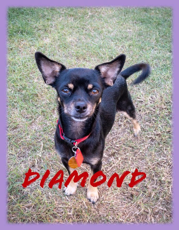 adoptable-diamond
