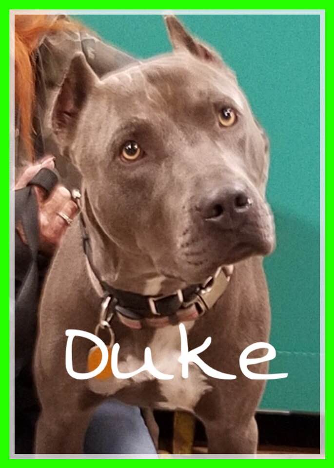 adoptable-duke