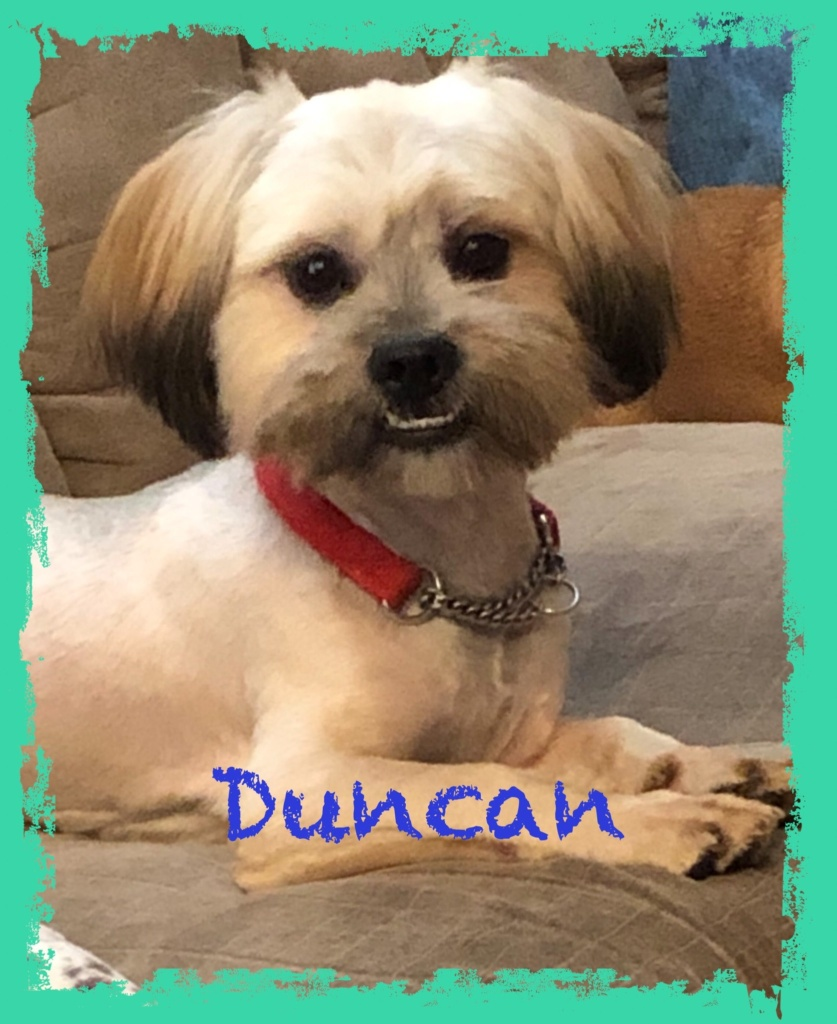 adoptable-duncan