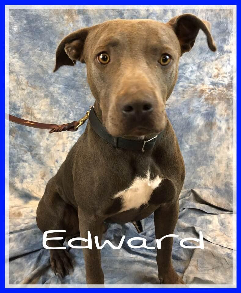 adoptable-edward