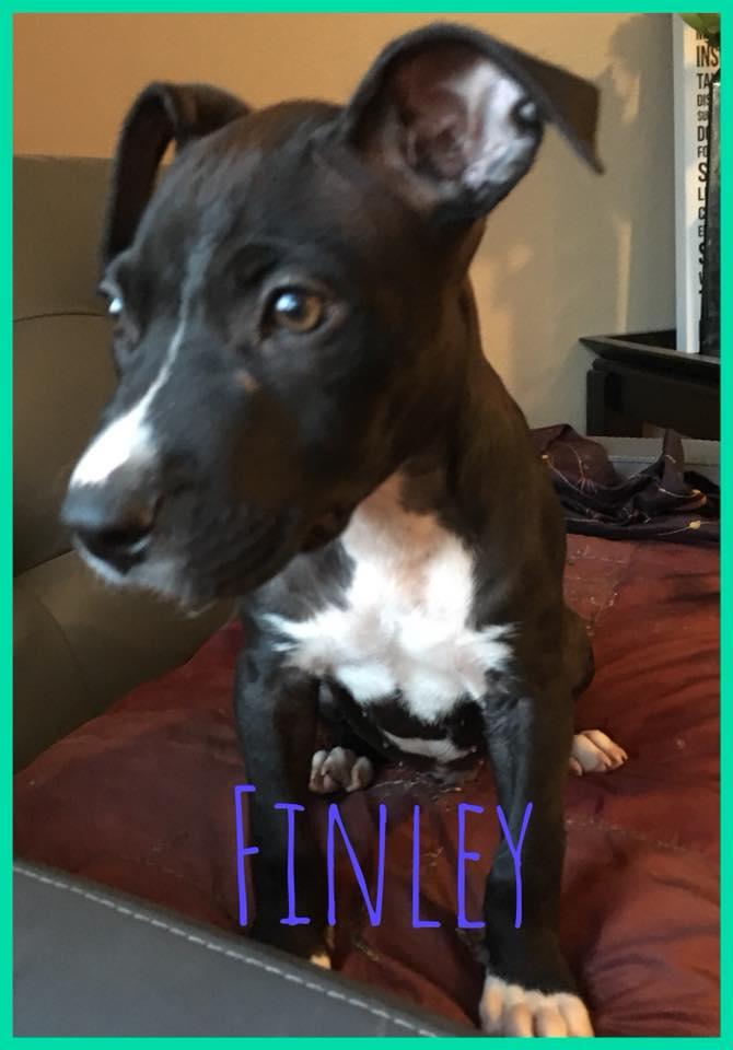 adoptable-finley