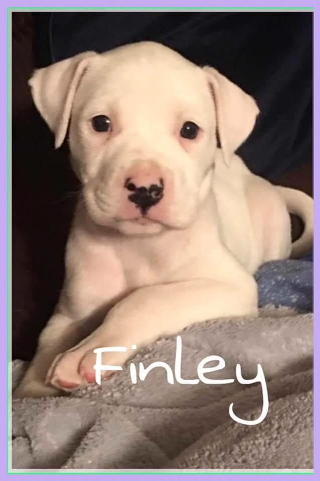 adoptable-finley2