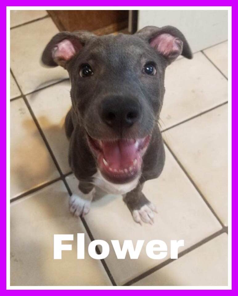 adoptable-flower