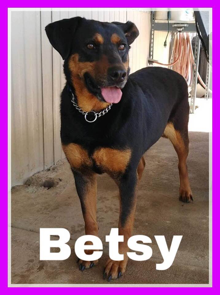 adoptable-happy-betsy
